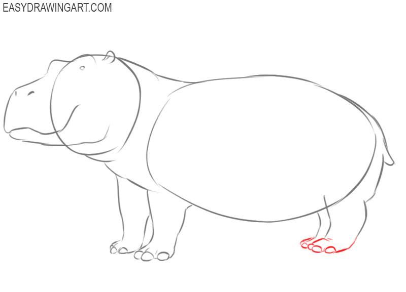 hippopotamus drawing colour