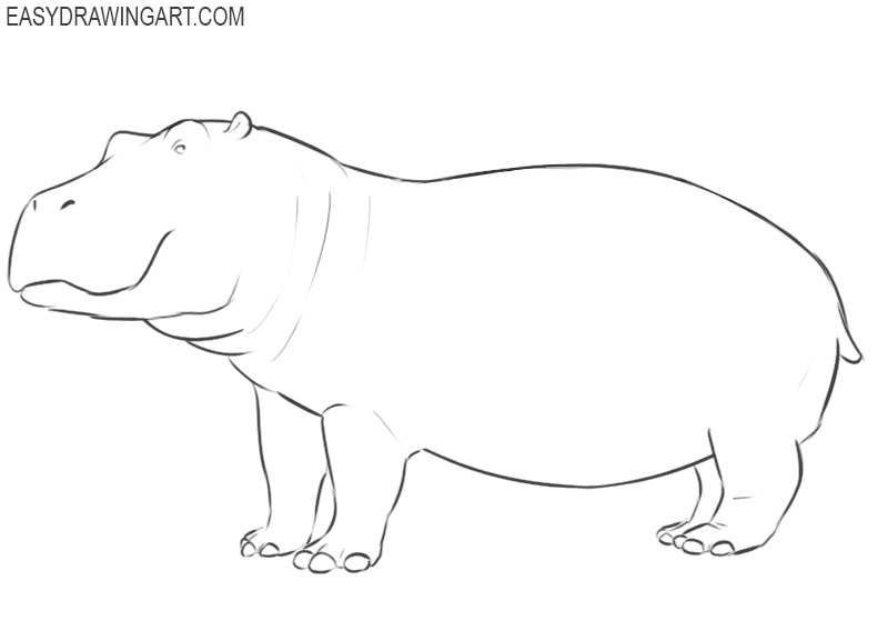 hippopotamus drawing pics