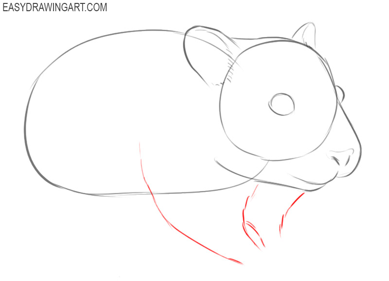 how to draw a basic hamster