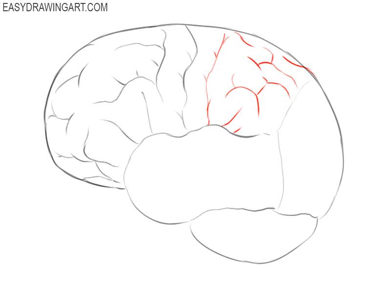 how to draw a brain cartoon