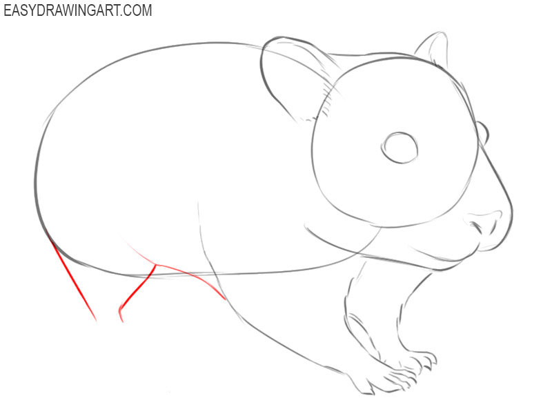 how to draw a cartoon hamster step by step