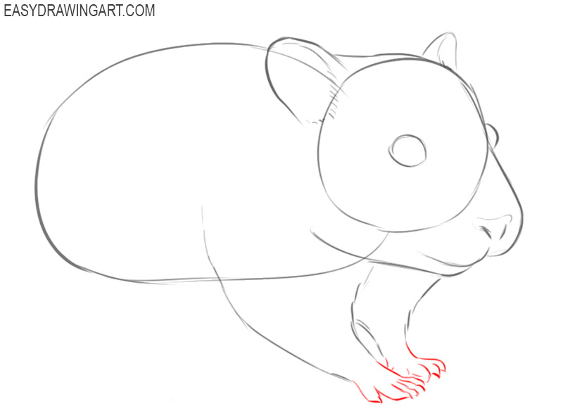 how to draw a cute hamster step by step