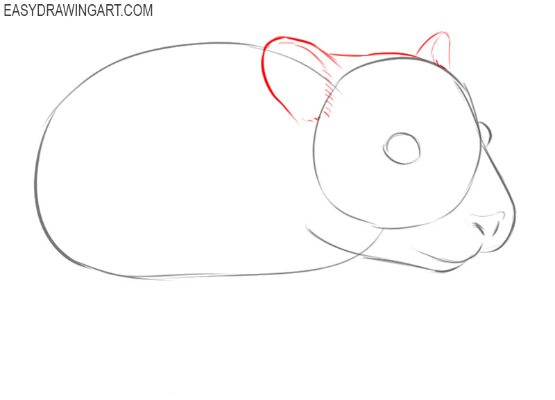 how to draw a picture of a hamster