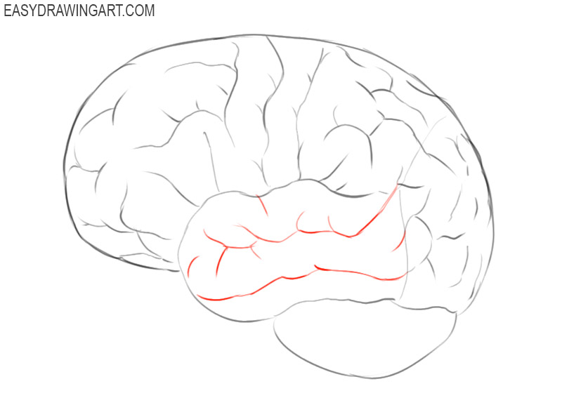 how to draw a simple brain step by step