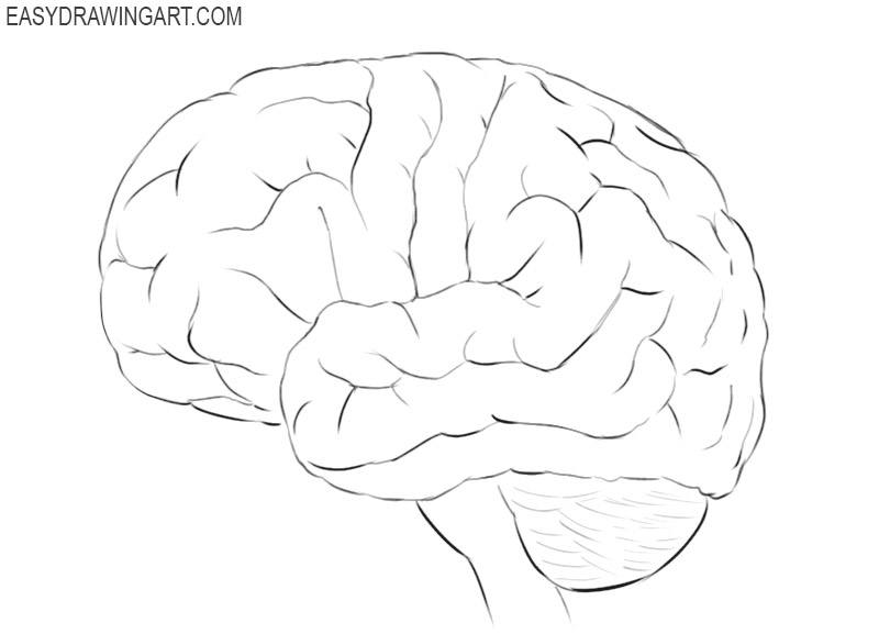 how to draw brain picture