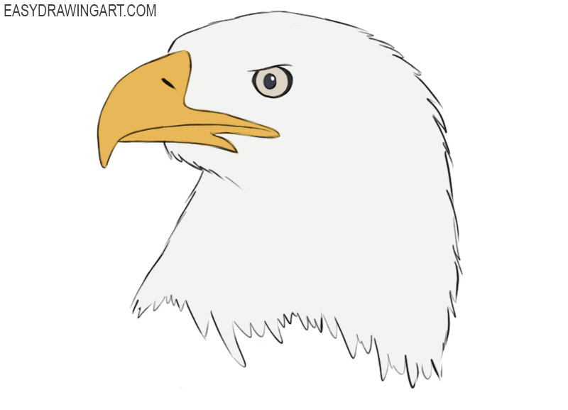 How To Draw An Eagle Head Easy Drawing Art