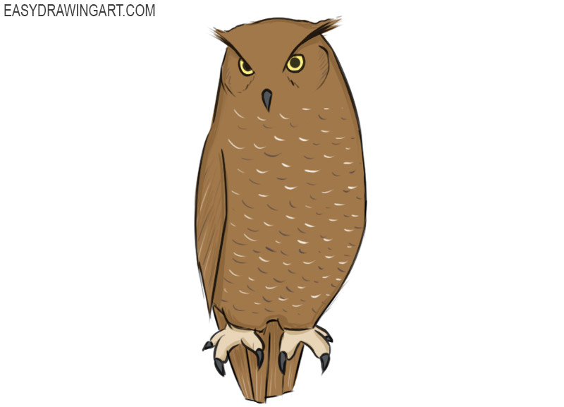 How To Draw An Owl Easy Drawing Art