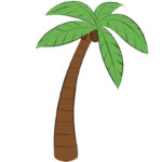 How to Draw a Palm Tree
