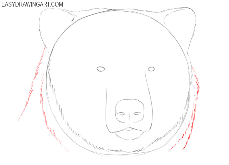 bear head drawing easy