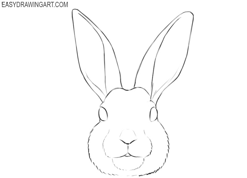 bunny face drawing easy