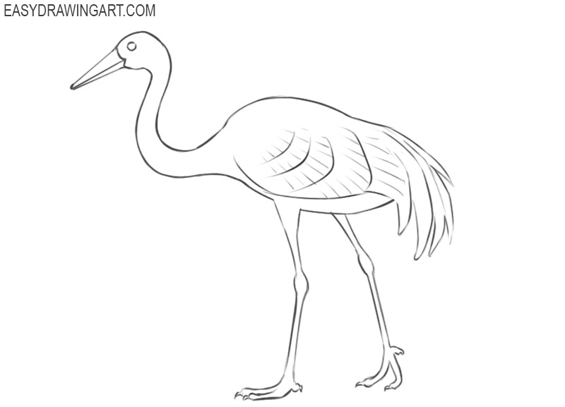 crane bird pencil drawing
