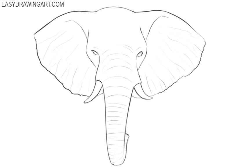 elephant head drawing step by step