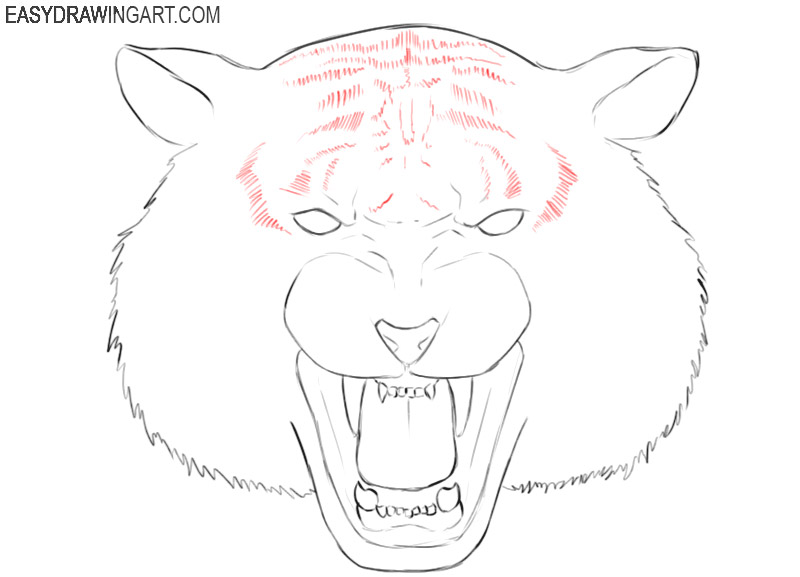 graphic tiger head drawing