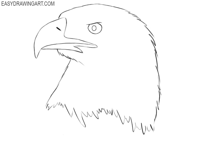 how to draw a bald eagle head step by step