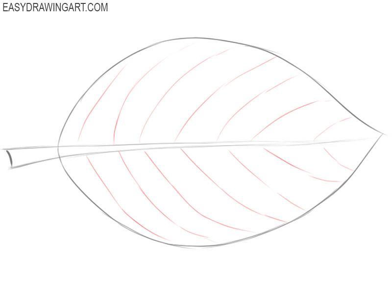 how to draw a basic leaf