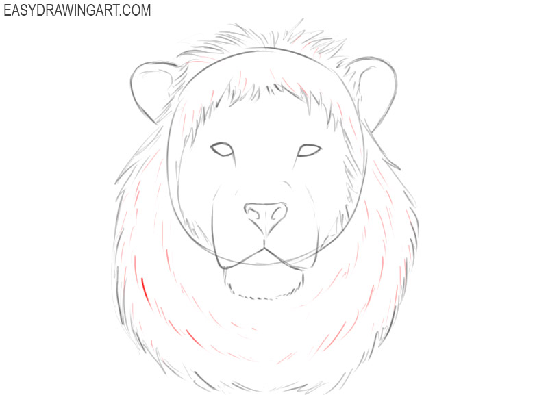how to draw a basic lion head