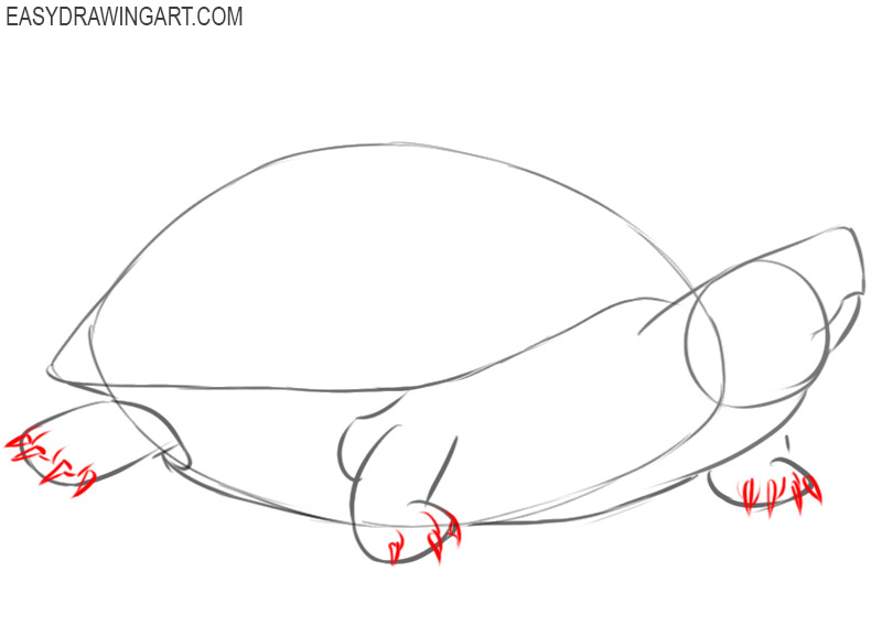 how to draw a basic turtle