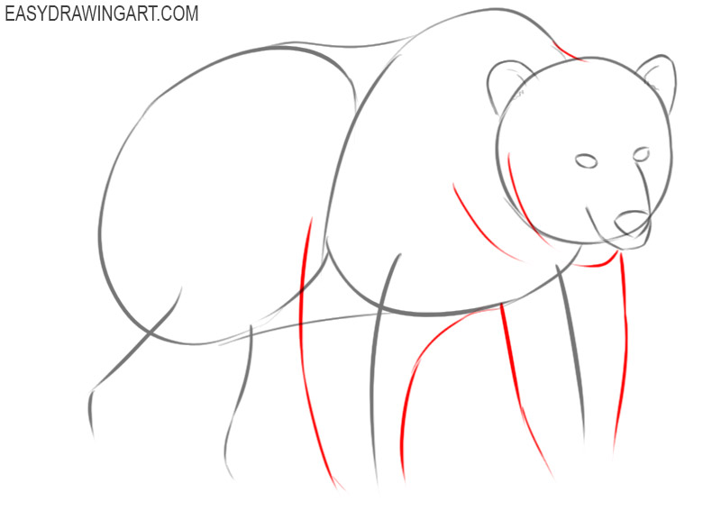 how to draw a bear by step