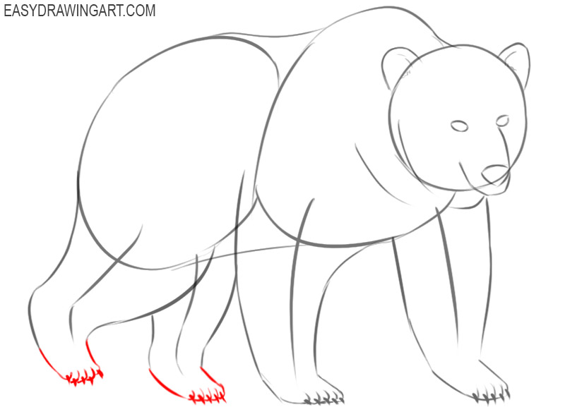 how to draw a bear easily