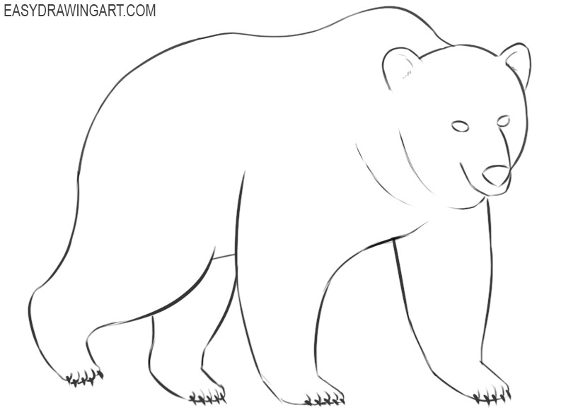 how to draw a bear easy and cute