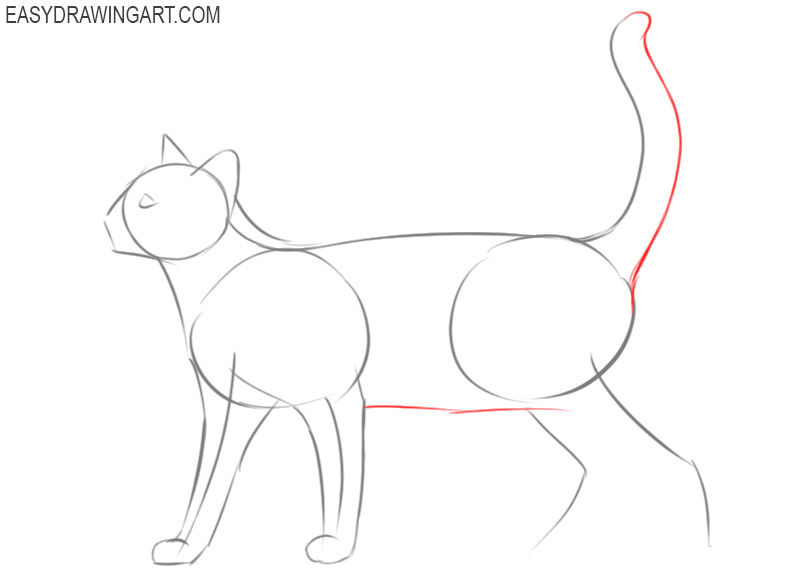 how to draw a cat by step by step