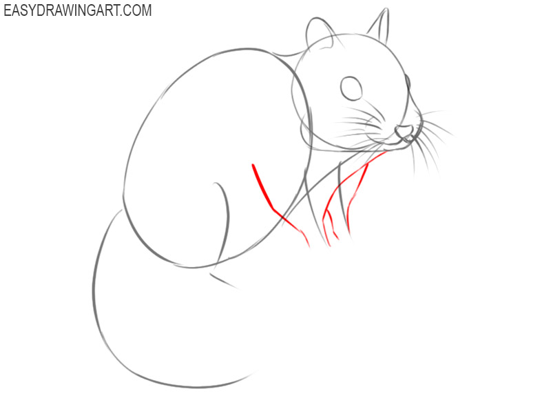 how to draw a chipmunk easy step by step