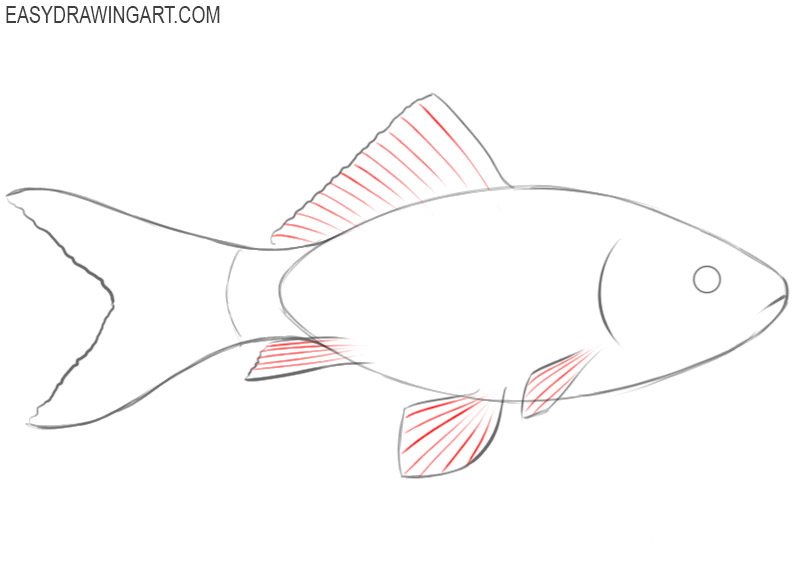 how to draw a cute fish step by step