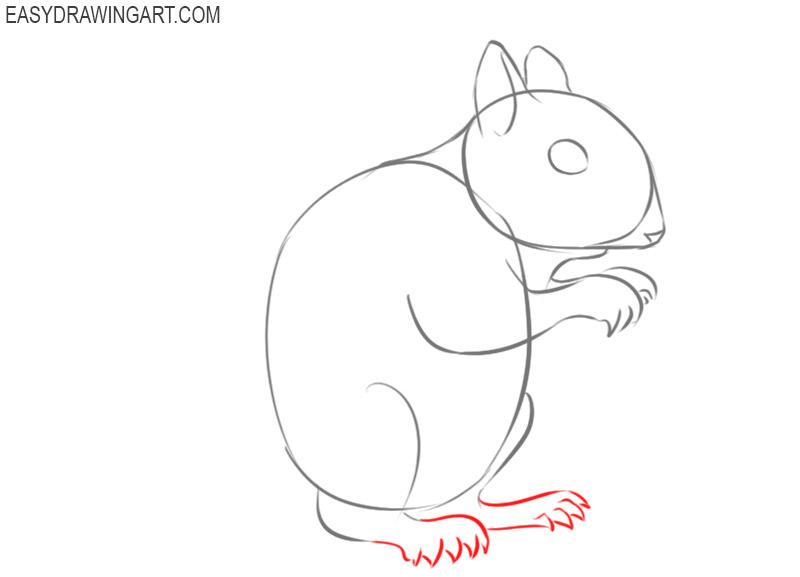 how to draw a cute squirrel easy