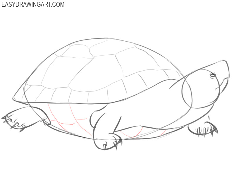 how to draw a cute turtle step by step