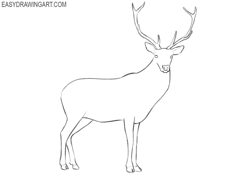 how to draw a deer images