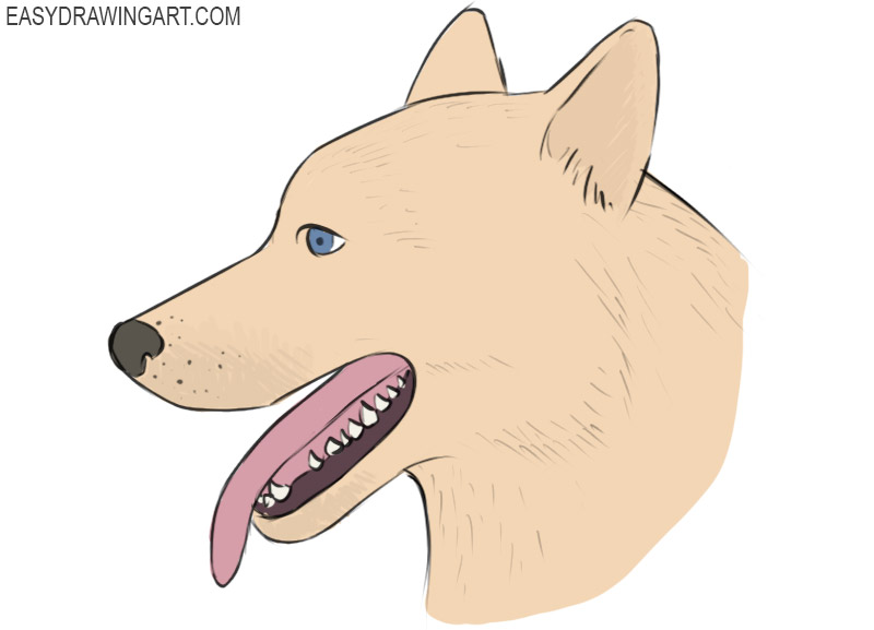 How To Draw A Dog Face Easy Drawing Art