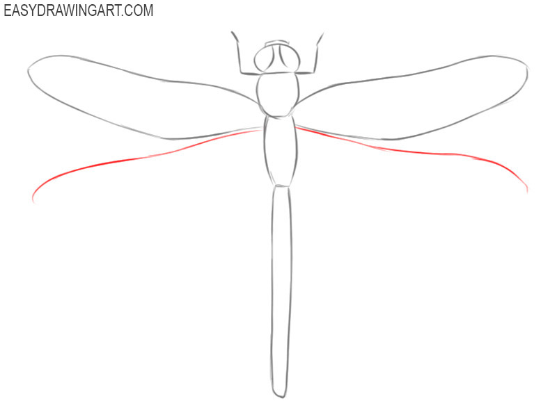 how to draw a dragonfly step by step for beginners