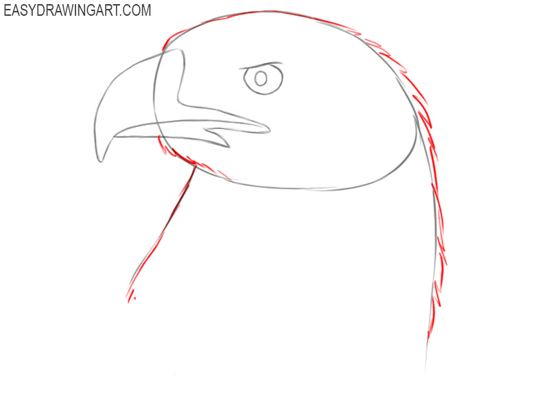 how to draw a eagle head step by step easy