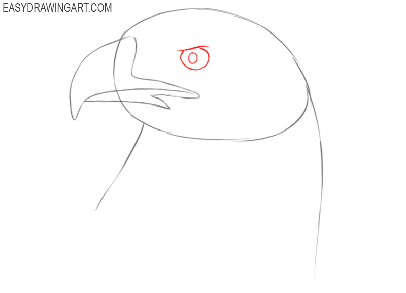 how to draw a eagle head step by step