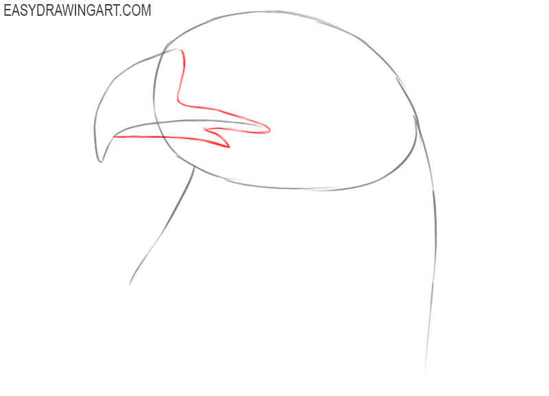 how to draw a eagle head
