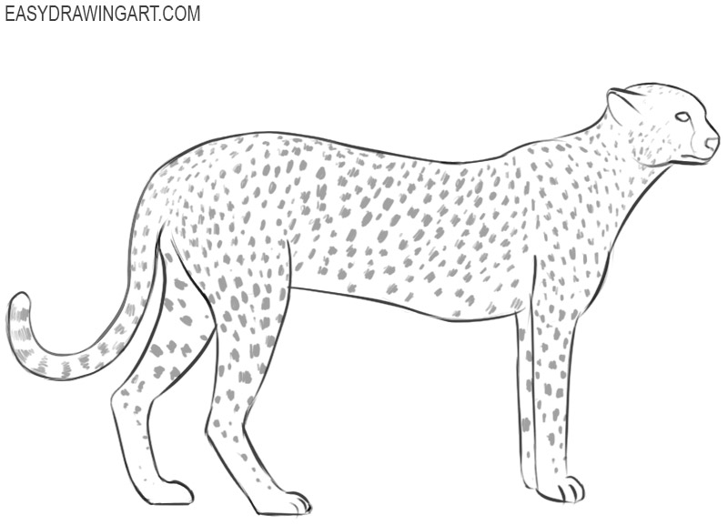 how to draw a easy cheetah