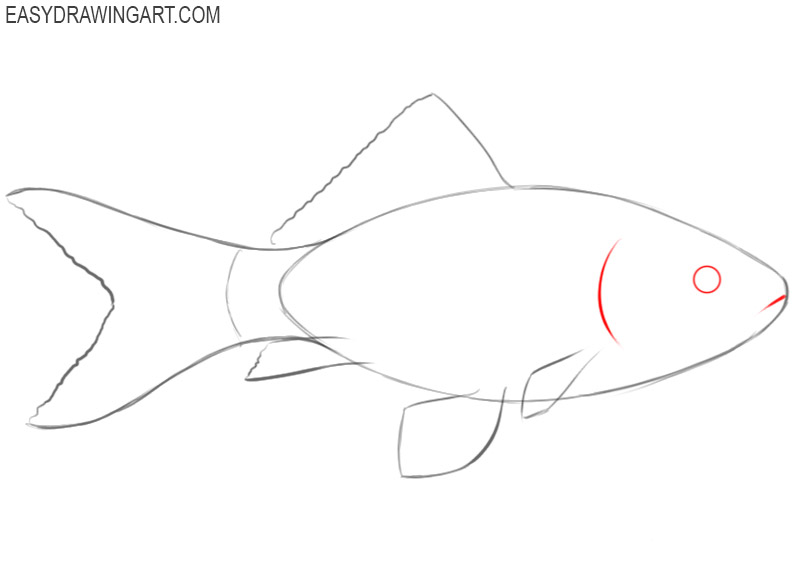 how to draw a fish colors