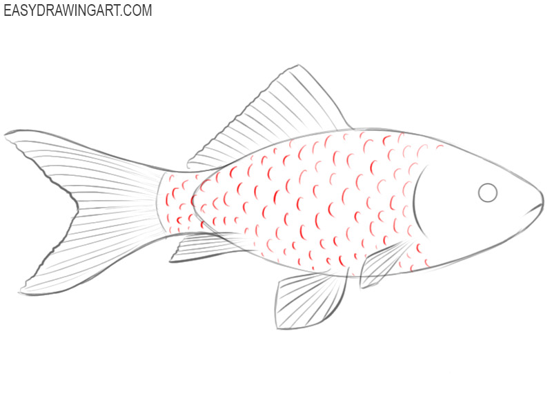 how to draw a fish draw so cute