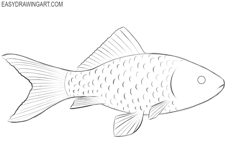 how to draw a fish easy way