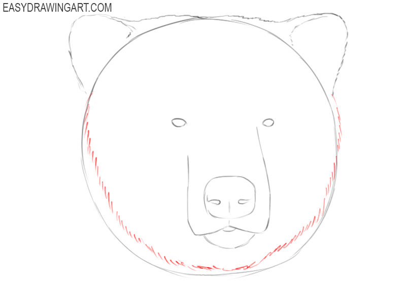 how to draw a grizzly bear head step by step