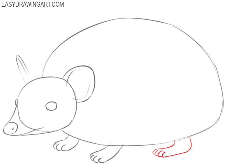 how to draw a hedgehog step by step for beginners
