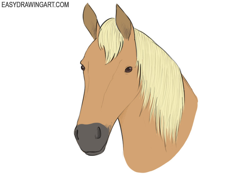 How To Draw A Horse Head Easy Drawing Art