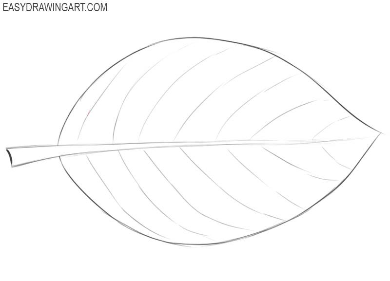 how to draw a leaf cartoon