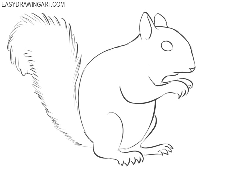 how to draw a little squirrel