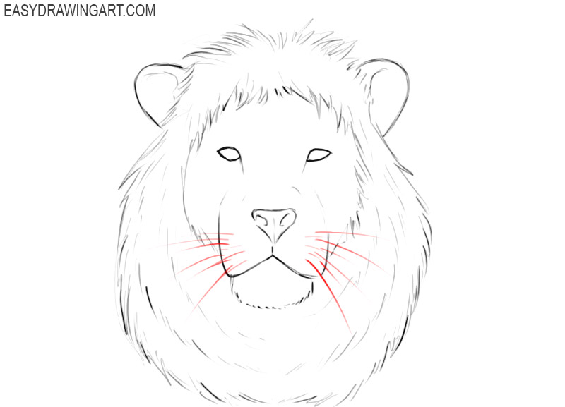 how to draw a male lion head