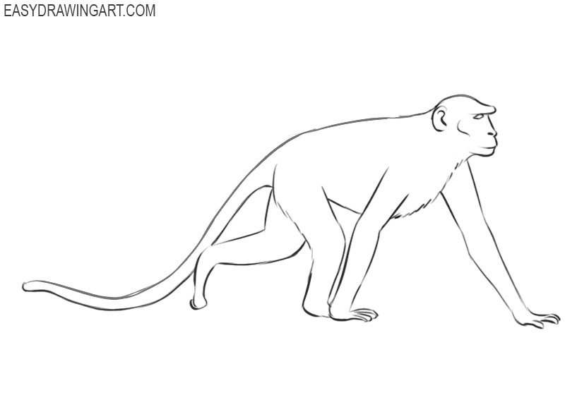 how to draw a monkey draw so cute