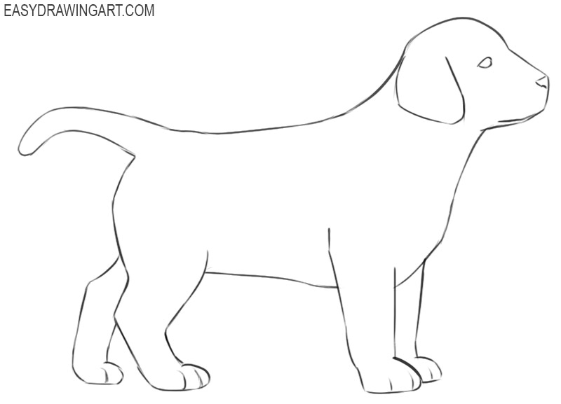 how to draw a puppy images