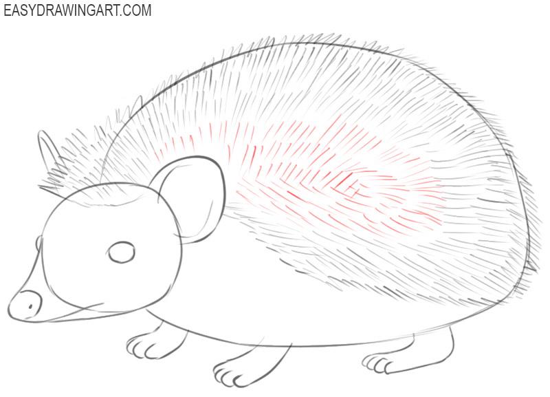 how to draw a really cute hedgehog