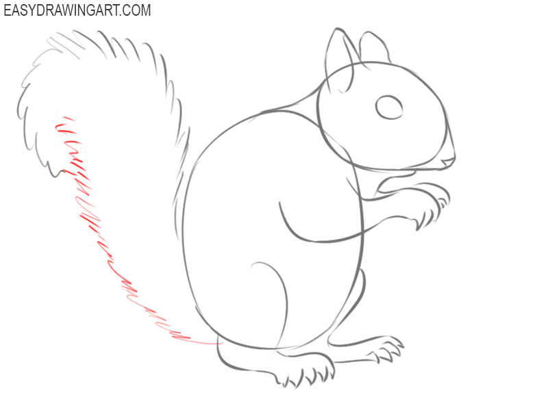 how to draw a squirrel draw so cute