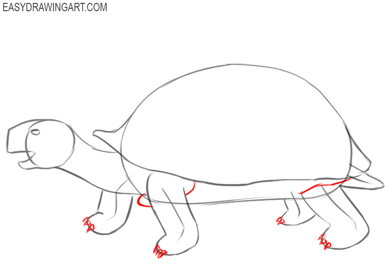 how to draw a tortoise in easy steps